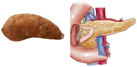 Sweet Potato – Pancreas