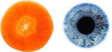Carrot – Eye