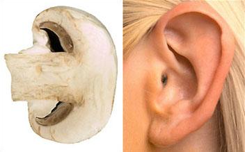 Mushroom – Ear